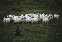 Sheep Herder, Donegal, Ireland